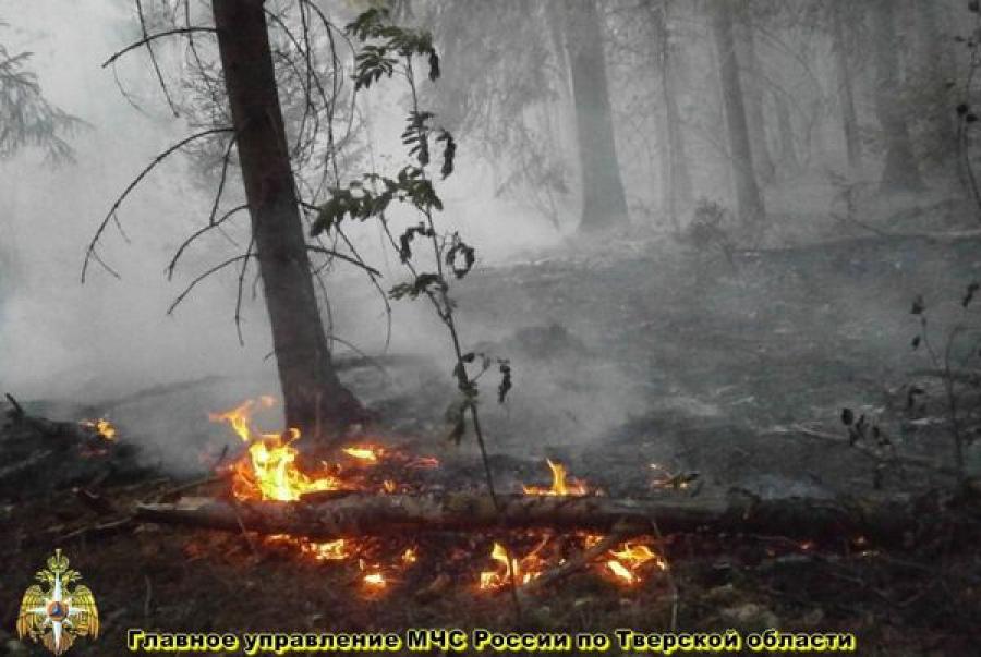 Лесной пожар неподалеку от деревни произошёл 14 июля в Калининском районе