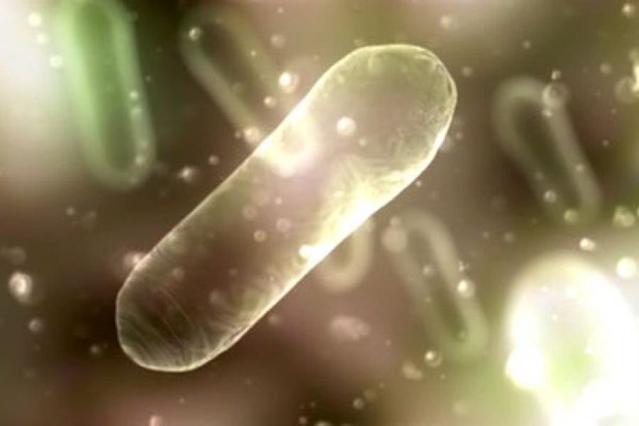 Опасные микроорганизмы найдены в свинине, из которой в Кашине хотели сделать колбасу