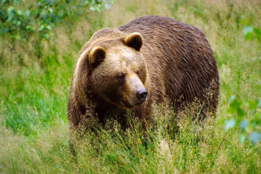 Всероссийские зоологические чтения проходят в ТвГУ