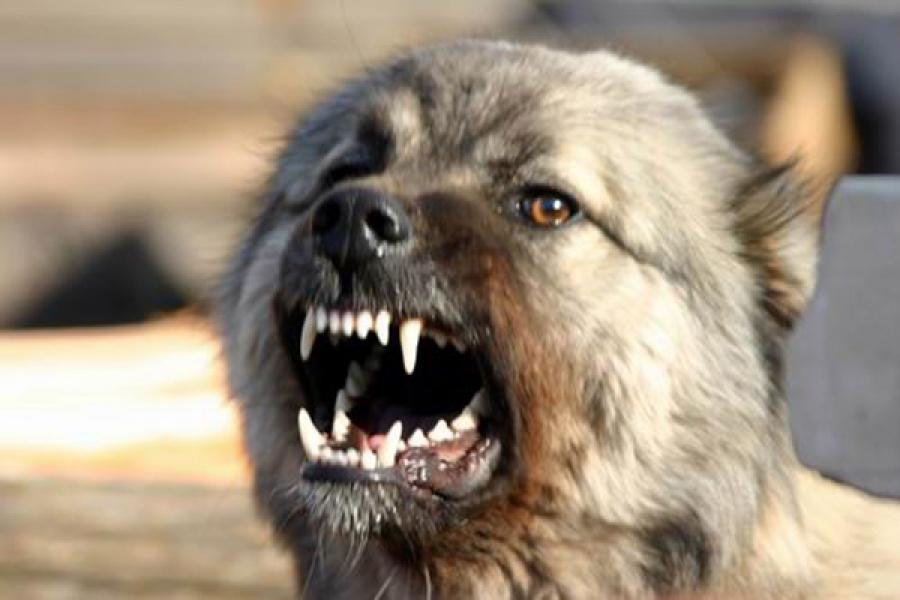 В Тверской области домашняя собака пала от бешенства