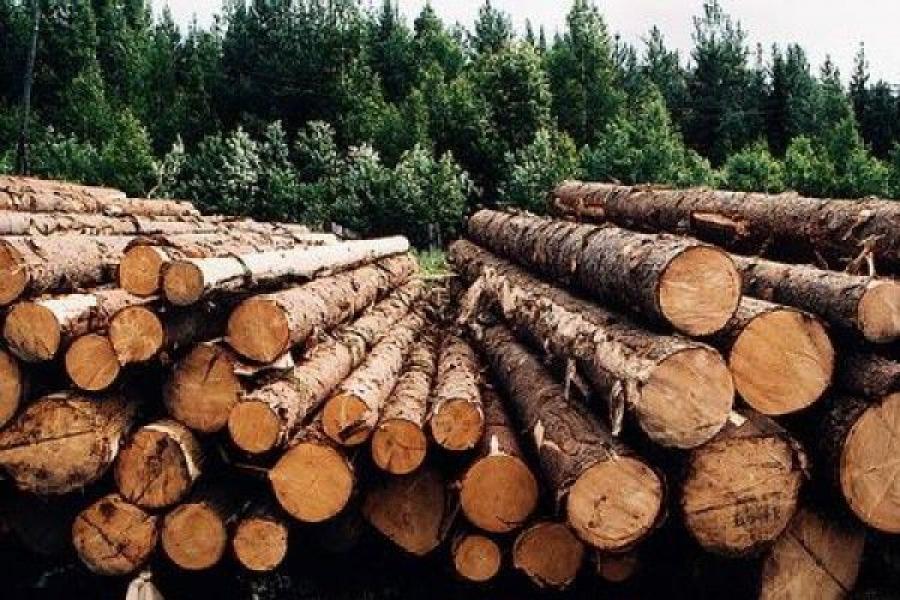 Лесная отрасль Тверской области должна развиваться