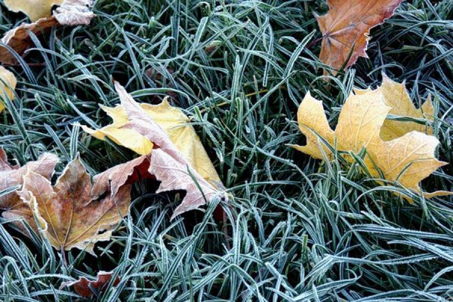 ГУ МЧС предупреждает о возможных заморозках