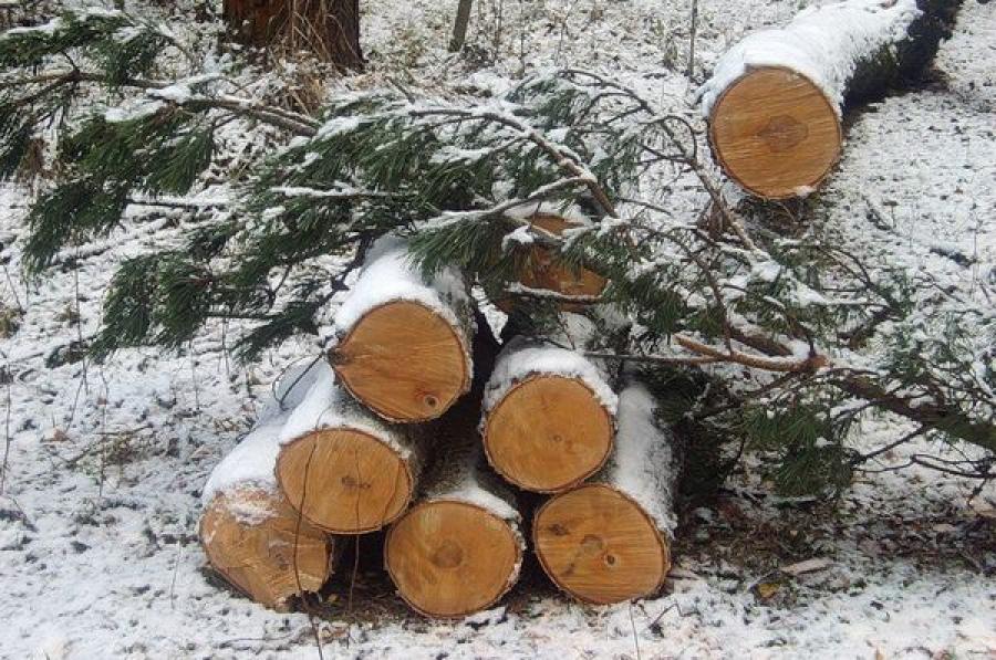 В Лихославльском районе «черный лесоруб» приговорен к крупному штрафу