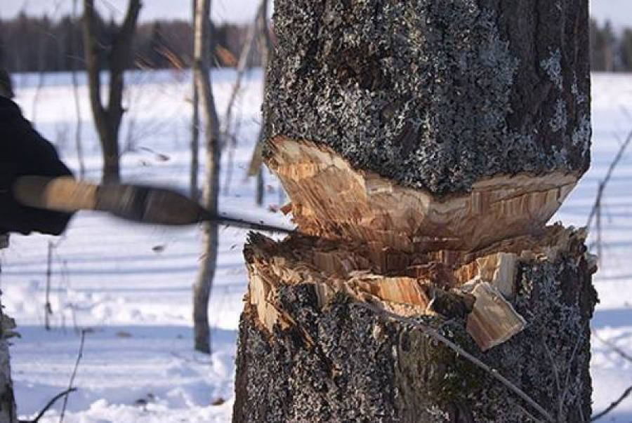 В Ржеве осуждён ещё один участник группы «чёрных лесорубов»
