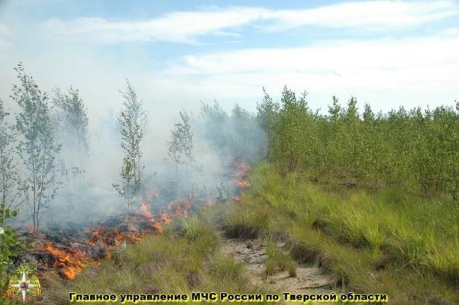 Пожары в Тверской области тушат более 1500 человек