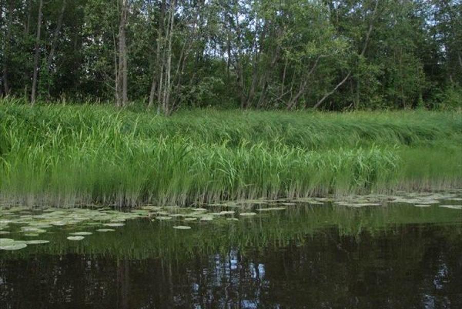 Река Осуга должна стать чище: на Каменской БКФ модернизируют очистные сооружения