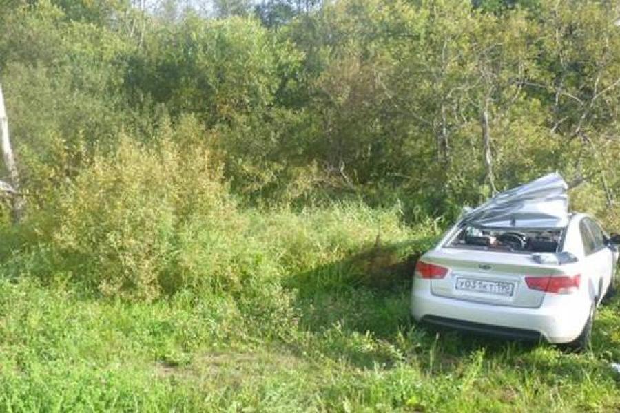 В ДТП с участием лося в Оленинском районе погиб человек