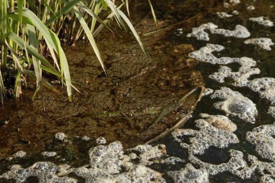 Экологи потребуют возмещения ущерба, нанесенного природе Тверской области