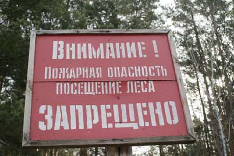 Запретные леса: доступ граждан на территорию лесного фонда в районах области ограничен