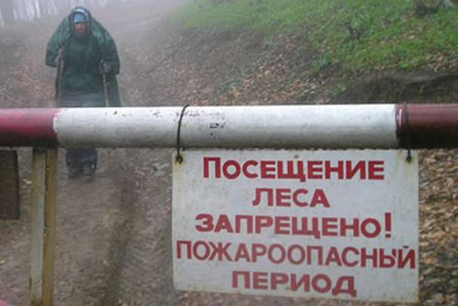 В трёх районах Тверской области введено ограничение пребывания граждан в лесах