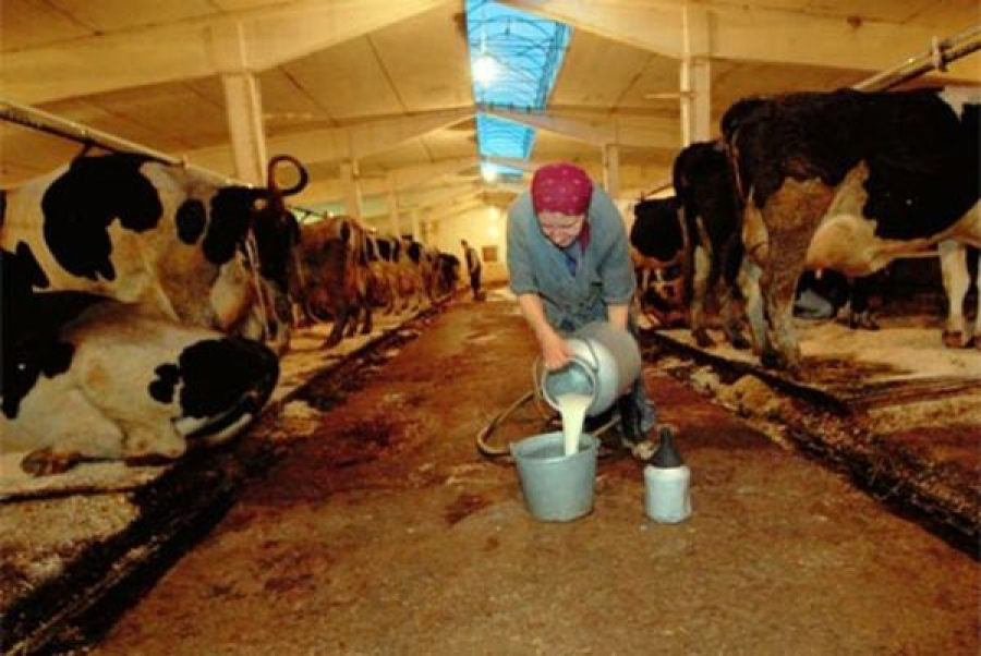 Краснохолмский колхоз оштрафован за нарушение ветеринарных норм