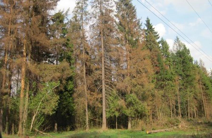 На посещение лесов Бежецкого района наложен запрет