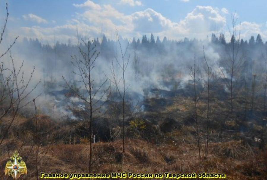 Новый лесоторфяной пожар: горит лес в Калининском районе