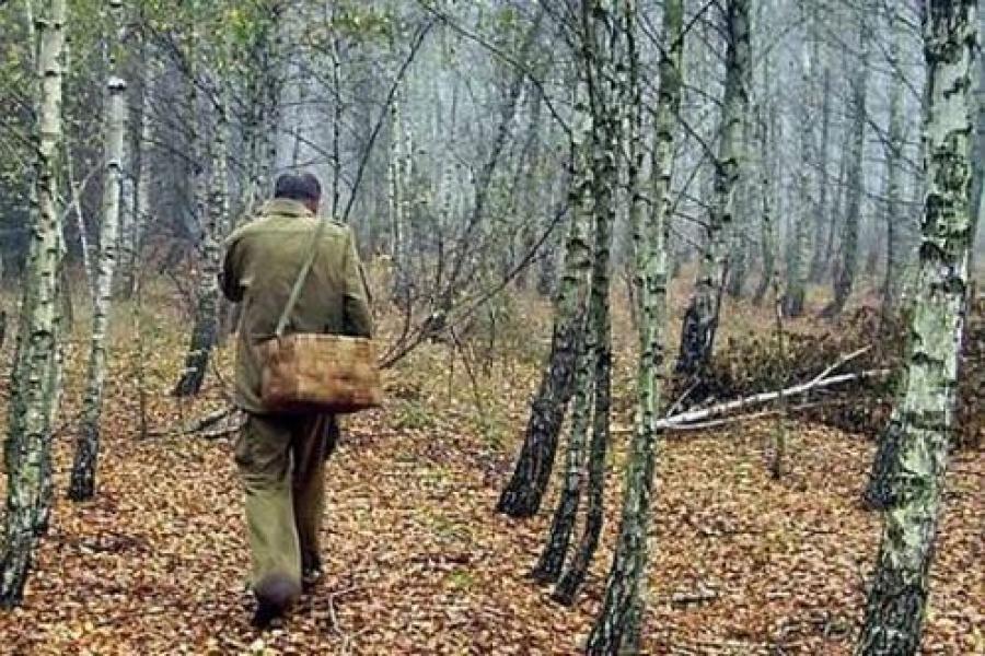 Спасатели напомнили, как не заблудиться в лесу