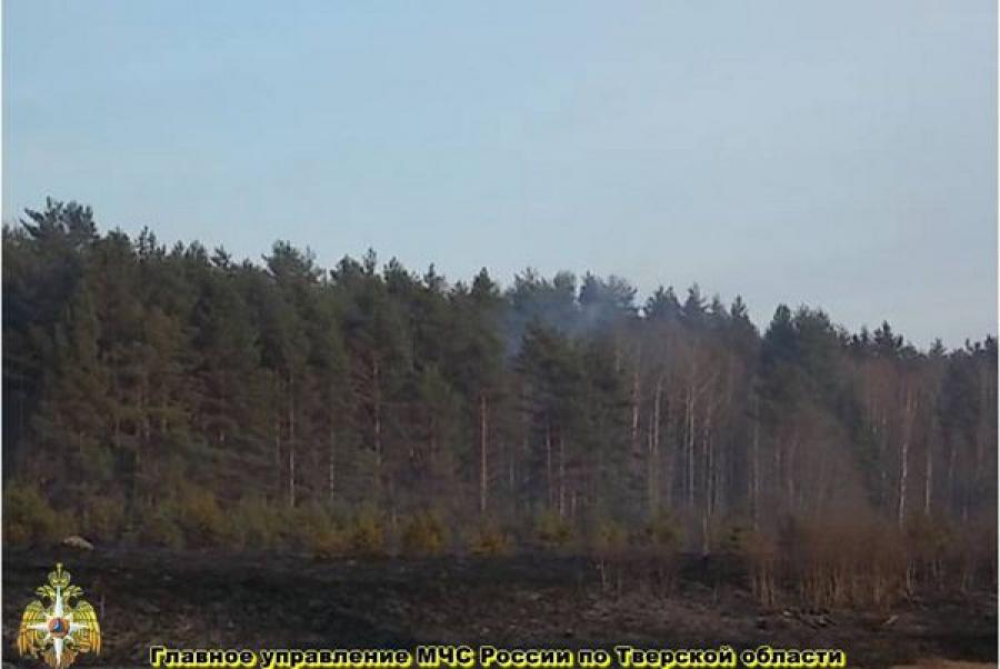 Новых очагов лесных пожаров в Тверской области не зафиксировано