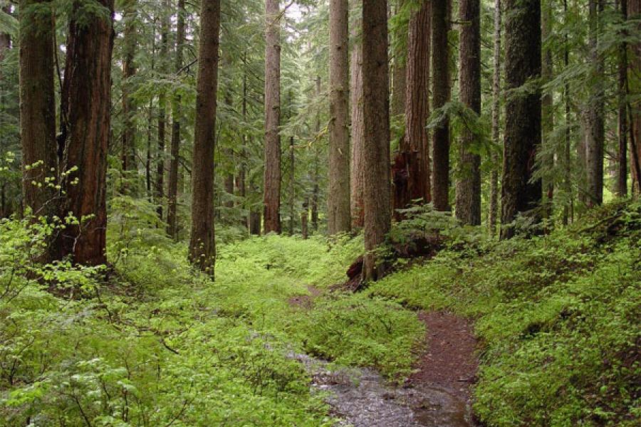 Леса Тверской области получат дополнительную защиту от пожаров