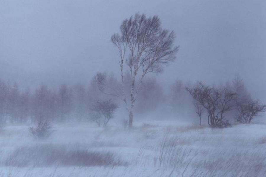В Тверской области 13 января ожидается сильный ветер