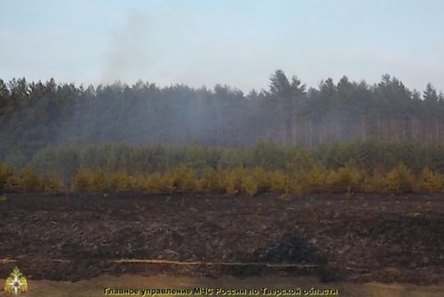 Лесной пожар произошел в Калининском районе