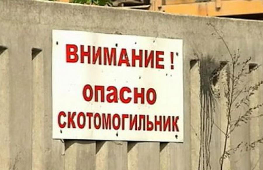 В семи районах Тверской области обнаружены пасные скотомогильники