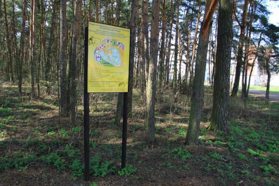 Стройка рядом с Бобачёвской рощей: позиция Минприроды региона
