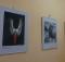 Выставка «Заповедные места России: Командоры»