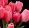 11-02-цветы