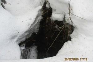 Лесник провалился под снег и оказался в берлоге