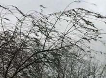 29-03-ветер