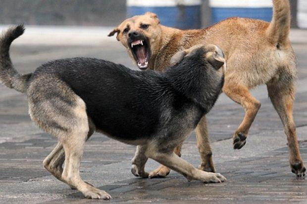 01-04-Собаки