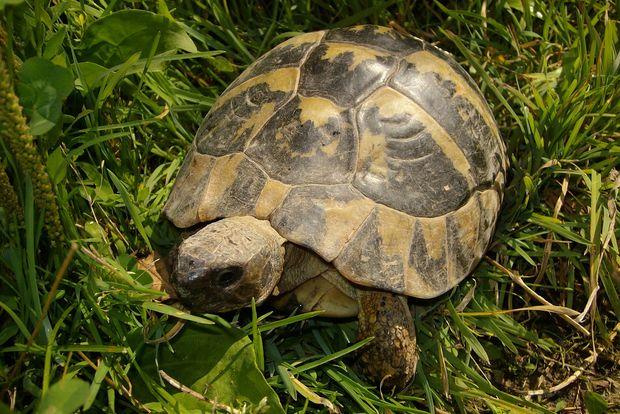 07-04-черепаха