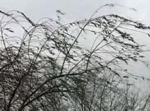 13-04-ветер