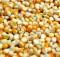 20-04-кукуруза