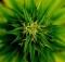 12-05-марихуана