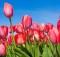 15-05-цветы