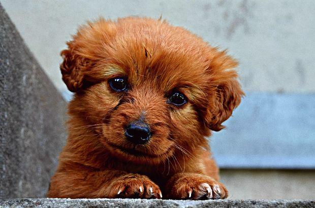 25-05-собака