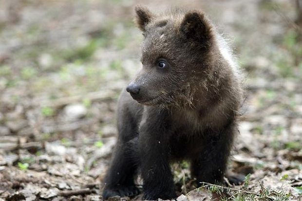 29-05-медвежонок