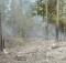 14-06-пожар-лес