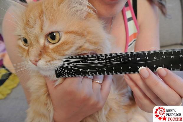 Кот с самыми длинными усами в России