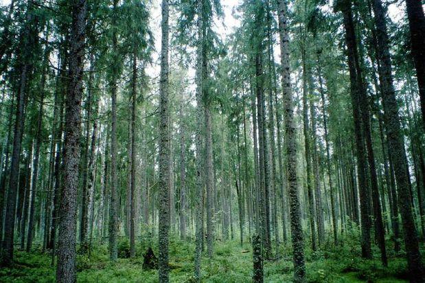 Лес_Тверская область