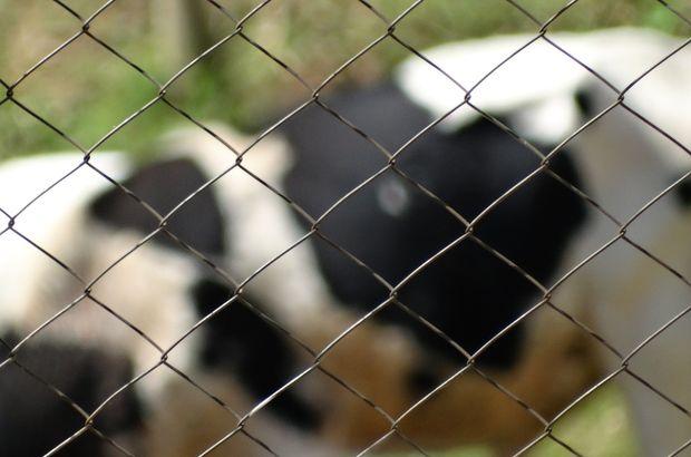 01-07-корова