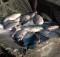 03-07-рыболовство