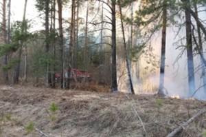 06-07-пожар-лес2