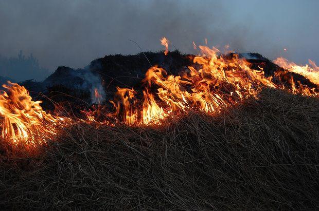 15-07-лес-пожар