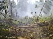 24-07-пожар-лес