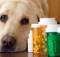 Лекарства для животных