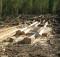 Лесозаготовка_рубка леса