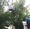 Спасатели_дерево-1