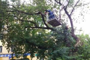 Спасатели_дерево-2