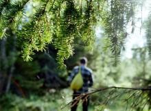 Заблудившийся в лесу