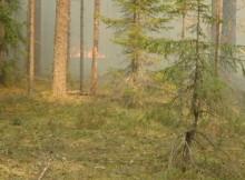 21-08-лес-пожар